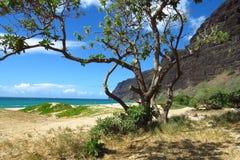 Strand bij Polihale-het Park van de Staat, Kauai, Hawaï royalty-vrije stock foto