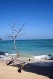 Strand bij zijn beste Royalty-vrije Stock Afbeelding
