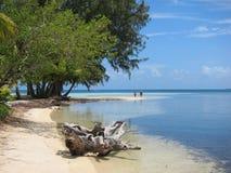 Strand bij Zuidenwater Caye Stock Afbeeldingen