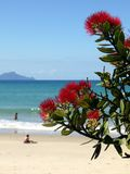 Strand: blühender pohutukawa Baum und Schwimmer Stockfotos
