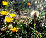 Strand-Blumen Stockfotos