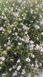 Strand-Blumen Lizenzfreie Stockbilder