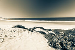 Strand-Bucht-Dünen-Weinlese Stockfotos