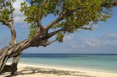 strand cuba fotografering för bildbyråer