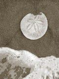 Strand dat Ontdekkingen kamt Stock Afbeeldingen