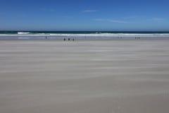 Strand de Falkland Eilanden stock afbeelding