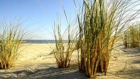 Strand der Ostsee mit Strandhafer stock footage