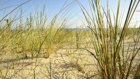 Strand der Ostsee mit Strandhafer stock video