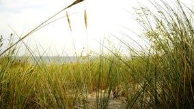 Strand der Ostsee mit Strandhafer stock video footage