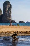 Strand des Affen Lizenzfreies Stockfoto