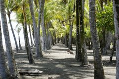 Strand Dominical Puntarenas Costa Rica Royaltyfri Bild
