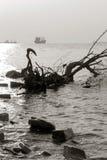 Strand, drijfhout en schepen tegen de het plaatsen zon, selectieve nadruk Royalty-vrije Stock Foto's