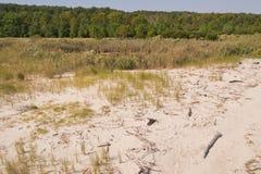 Strand, dyner, Driftwood och tidvattens- pöl royaltyfri foto