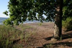 Strand-Eichen-Baum lizenzfreie stockfotos