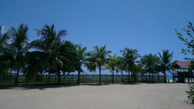 Strand en bomen Stock Foto