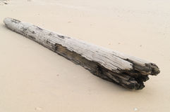 Strand en logboek stock fotografie