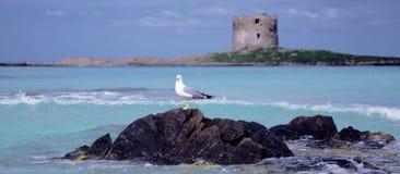Strand en overzees Royalty-vrije Stock Afbeelding