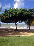 Strand en overzees op de kust van Bahia stock foto