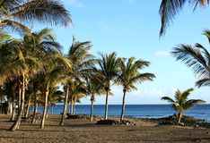 Strand en palmen Royalty-vrije Stock Afbeelding