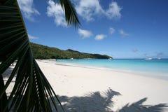 Strand en palmen 3 Royalty-vrije Stock Afbeeldingen