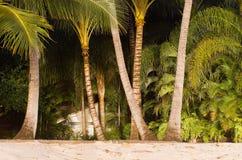 Strand en palmen Royalty-vrije Stock Fotografie