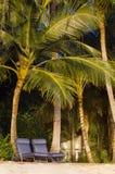 Strand en palmen Stock Afbeelding