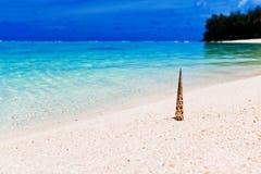 Strand en tropische shell op wit zand Stock Afbeeldingen