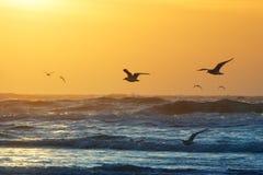 Strand en zonsondergang stock afbeelding