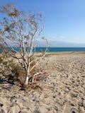 Strand för dött hav på en Sunny Day med ett träd i förgrunden Arkivfoto