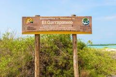 Strand för El Garrapatero på den Santa Cruz ön i Galapagos Royaltyfri Foto
