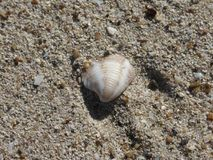 Strand för Muro ` s på den Majorca ön Royaltyfri Fotografi