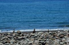 Strand för PraiaFormosa singel arkivbild