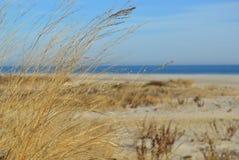 Strand-Flora Lizenzfreies Stockbild