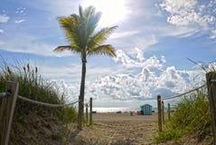 strand florida miami USA Arkivbilder