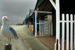 Strand-Hütte u. Seemöwe Lizenzfreies Stockfoto