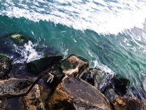 Strand hav, vinterväder arkivbilder