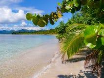 Strand in het Nationale Park van Cahuita Stock Afbeeldingen