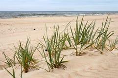 Strand in het overzees Royalty-vrije Stock Foto's