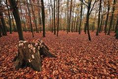 Strand-Holz im Herbst Lizenzfreie Stockfotografie