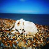 Strand-Hund Stockbild