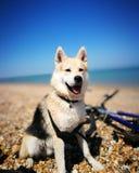 Strand, Hund und Fahrrad stockfotos