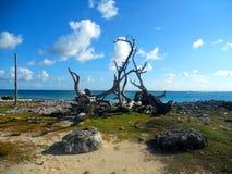 Strand i Bonaire Arkivfoton
