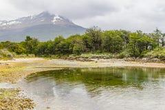 Strand i den Lapataia fjärden, Tierra del Fuego National Park royaltyfri foto