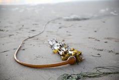 Strand i Kalifornien, USA Royaltyfria Foton