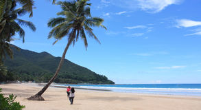 Strand i Palawan Arkivfoto