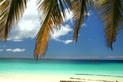 Strand i Zanzibar Arkivfoto