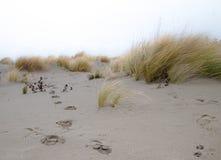 Strand im Wind Lizenzfreies Stockbild