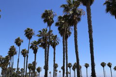 strand Kalifornien venice Arkivbilder