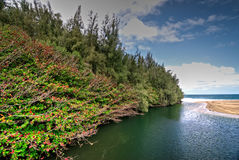 Strand Kauais, Hawaii Stockbilder