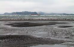 Strand at Low Tide met Zeemeeuwen Stock Afbeelding
